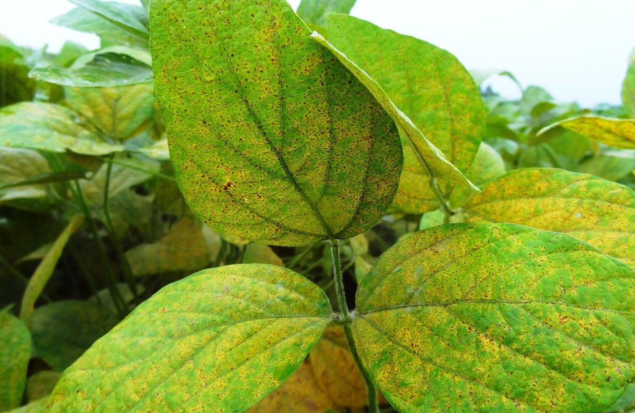 controle de pragas horta organica